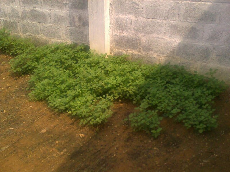 Spinach patch2