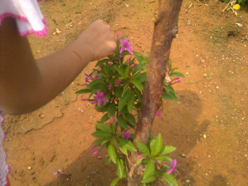 Pluckingflowers3